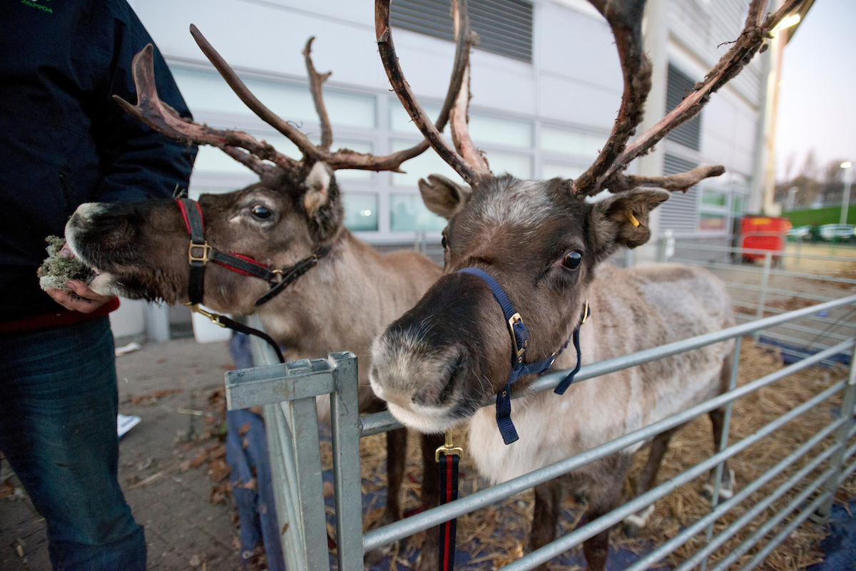 Two reindeer outside the stadium before the Premier League match at the KCOM Stadium, Hull Picture by Russell Hart/Focus Images Ltd 07791 688 420 26/12/2016